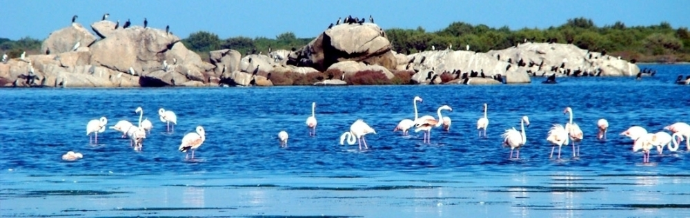 Birdwatching in Beautiful Lagoon of San Teodoro - Costa del sole travel